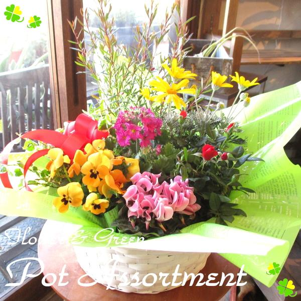 【送料無料】お花やグリーンの詰め合わせ♪ 季節のおまかせ寄せ鉢(Lサイズ) 【薫る花】【寄せ植え/寄せ鉢/アソート/花苗/鉢花/ハーブ/プレゼント/ギフト/誕生日/開店祝い/引越し祝い】